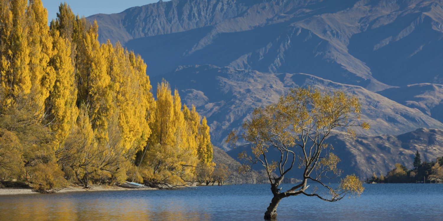 Flights to Wanaka